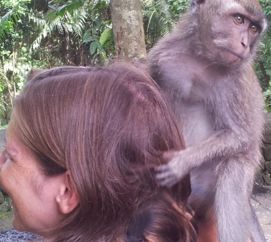 Gabi Monkey 2